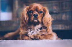 dog hair, pet hair on floors