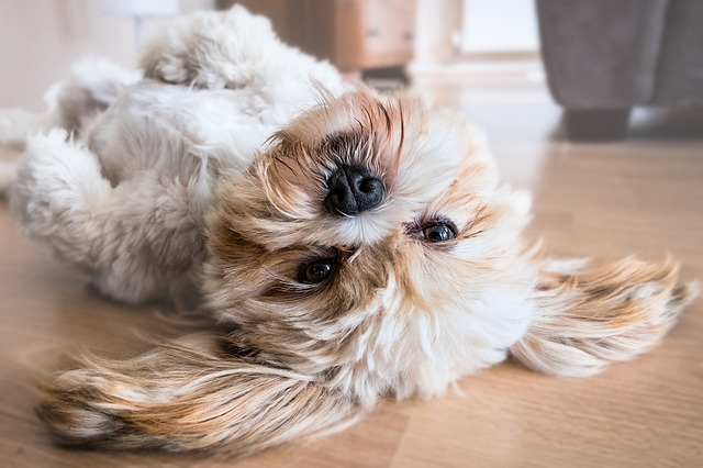 dog hair off hardwood floors