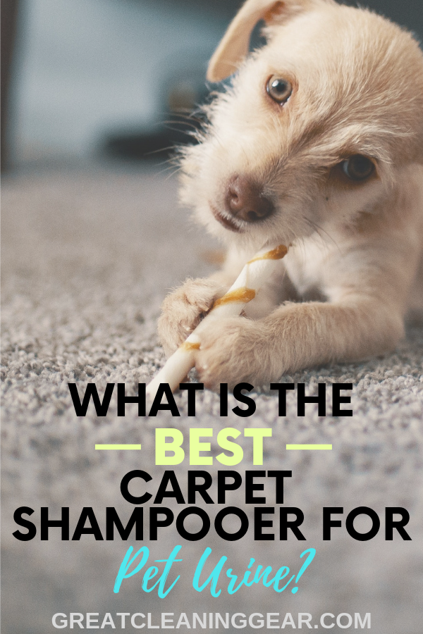 best carpet shampooer for pet urine