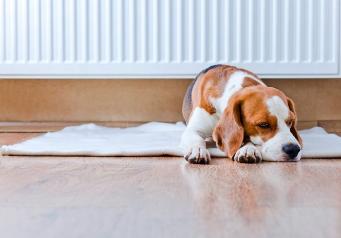 how to protect hardwood floors from dog urine